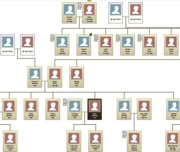 Sims tree